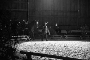 spectacle dressage 2015
