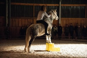 spectacle dressage poney