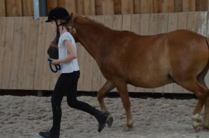 stage cheval travail a pied orne