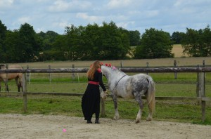 spectacle equestre travail a pied
