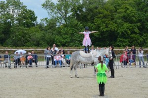 spectacle equitation voltige