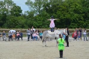 spectacle equitation voltige
